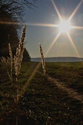 february (de-)light