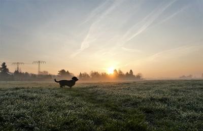 Morgennebel mit Hund