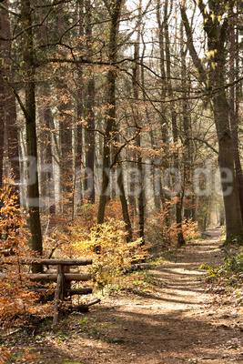 Waldspaziergang im März
