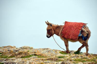 Der Esel - Transportmittel Nr. in Marokko