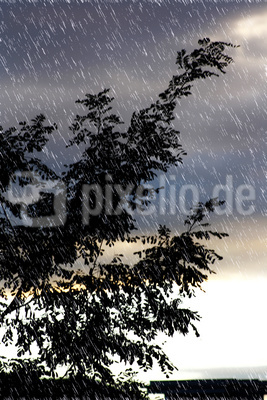 ein baum im regen