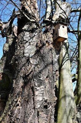 Ökologisch Gärtnern - Toter Kirschbaum als Biotop