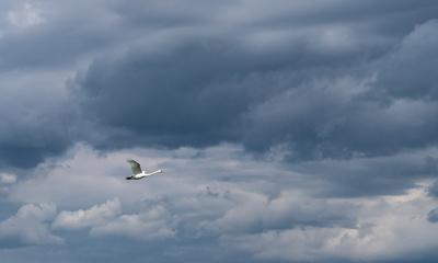 Am Neuenburgersee