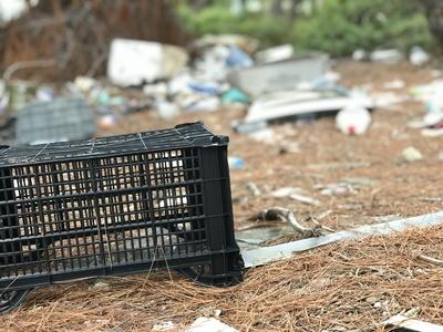 Illegale Mülldeponie im Wald