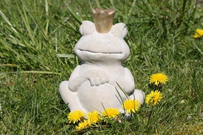 Froschkönig im Gras