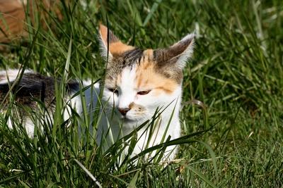 Halb versteckt im Gras