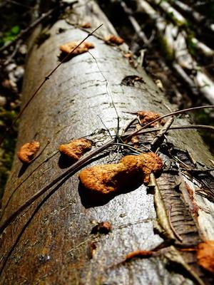 Baumstumpf mit Pilzen