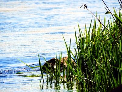 Wasser mit Gras