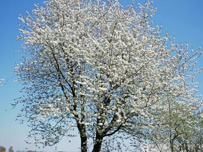 frühlingsblütentraum