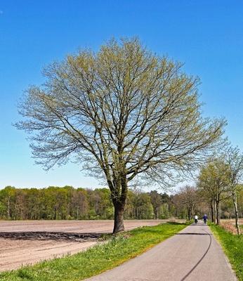 Radfahren im Münsterland