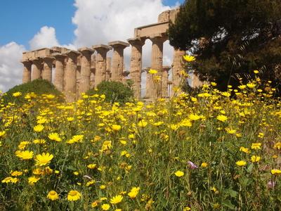 Tempelanlage bei Selinunte /  Sizilien