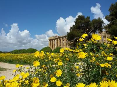 Frühling in der Tempelanlage bei Selinunte