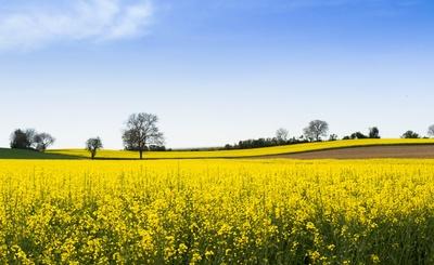 Landschaft in gelb