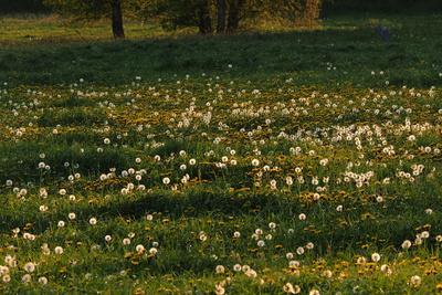frühlingswiese im abendlicht