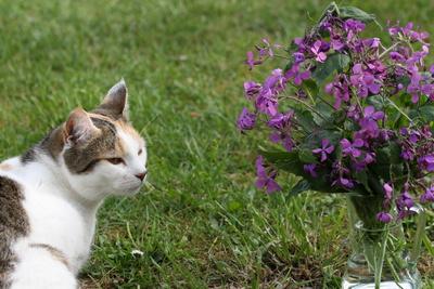 Katze und Blumenvase