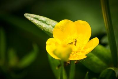 Macro Blüte 1