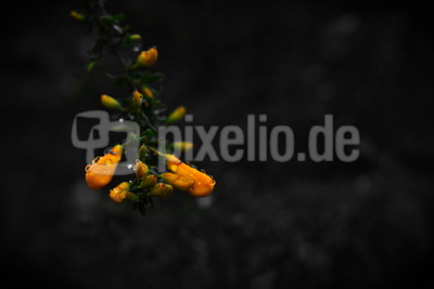 Waldblüten