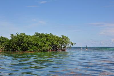 Mangroven in der Karibik