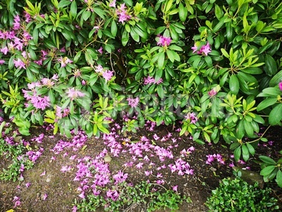 Die Blüten fallen schon