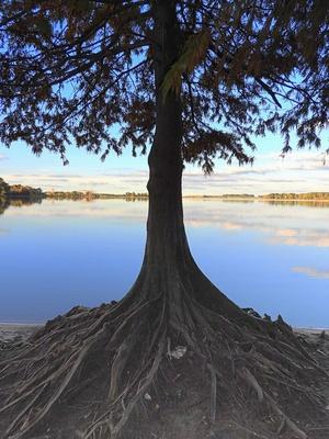 Baum am Stausee Represa del Canelón Grande, Uruguay