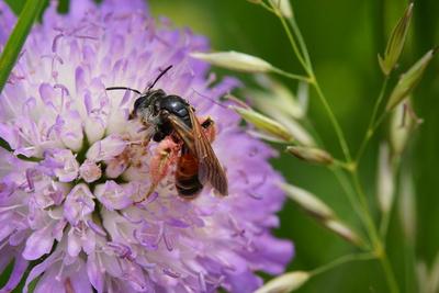 Wildbienenfleiß