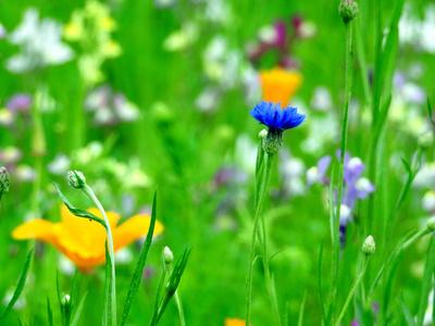Blumenwiese 2