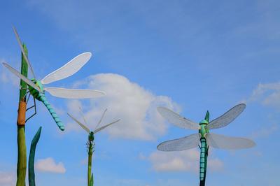 Demonstrativ für Insektenleben