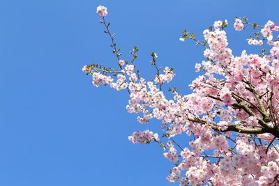 Blüten 467
