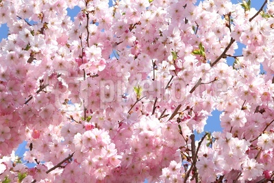Blüten 469