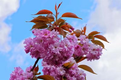 Zarte Baumblüte