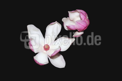 Blüten 470