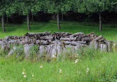 Altes Holz in der Streuobstwiese