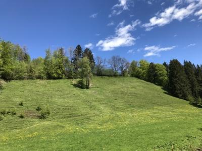 Wiese: Eistobel im Westallgäu / Foto. Alexander Hauk