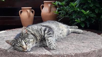 Fauler Kater zum Weltkatzentag