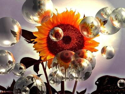 Sonnenblume mit Blasen