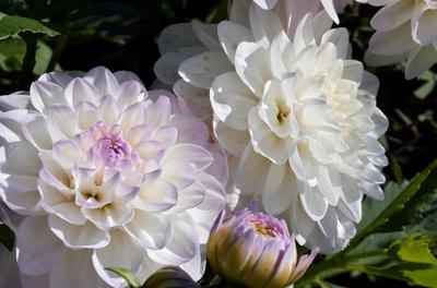 Weiße Blütenpracht 02