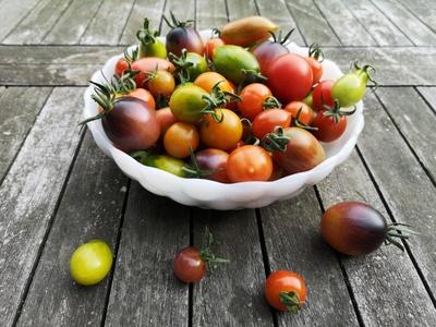 Leckere Tomatenvielfalt