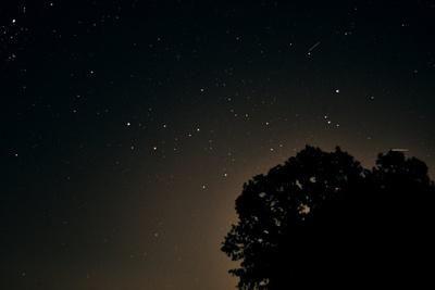 Nachtaufnahme mit Baum