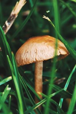Kleiner Pilz