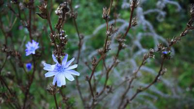 Späte Blüte