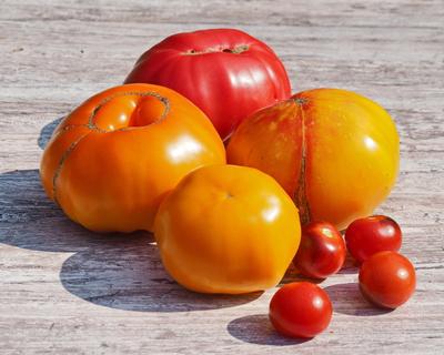tomaten ( alte sorten )