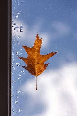 Herbstblatt am Fenster