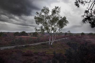Regenschauer in der Lünebuger Heide