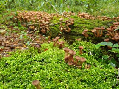 Pilze sprießen