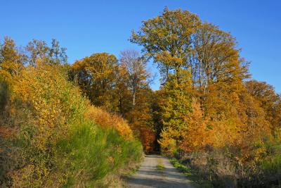Spaziergang im Herbstwald