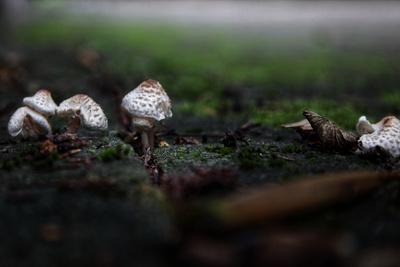 Pilze zwischen den Pflastersteinen