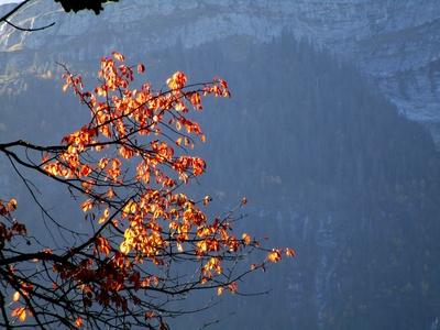 Herbstbaumzweig