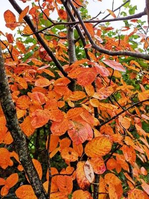 Schönes Herbstlaub