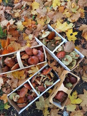 Herbstlaub mit Pilzen