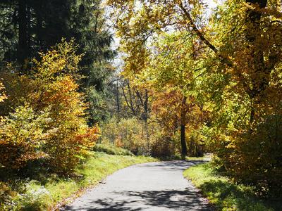 Bergwald im Herbst